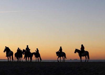 Lusitano-trail-rides-sunset